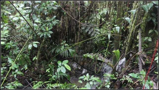 El Bosque de las Cataratas