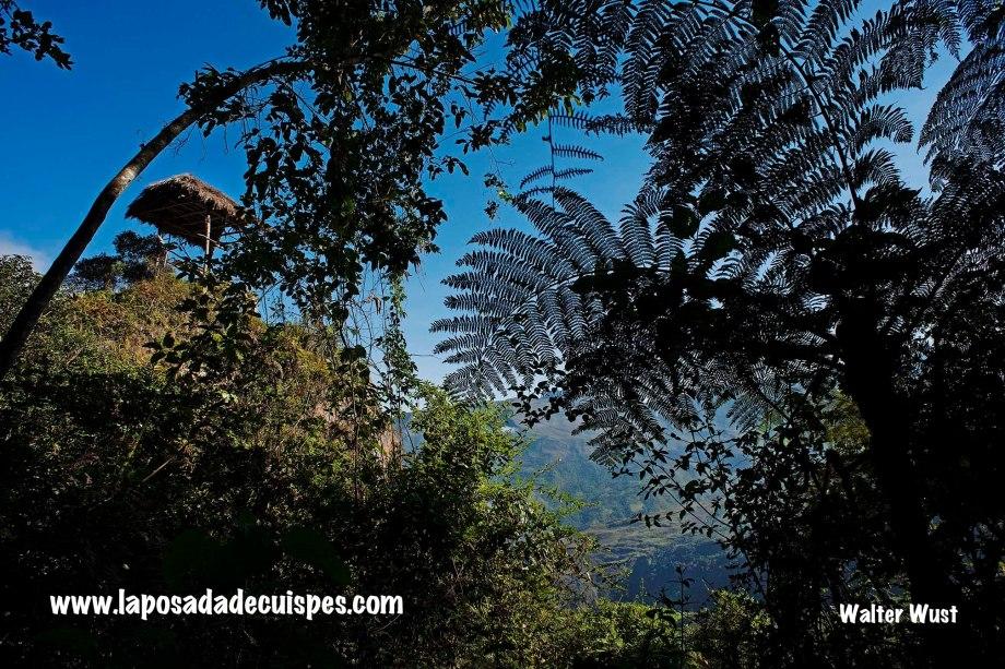 Yumbilla falls waterfall La Posada de Cuispes-029