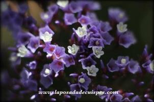 chachapoyas-yumbilla-la-posada-de-cuispes-027-copia