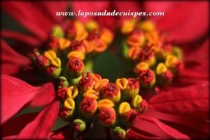 cuispes-lodge-yumbilla